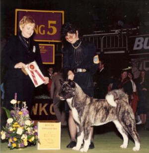 Mrs. Vics Judging Best Of Breed at Westminster Kennel Club