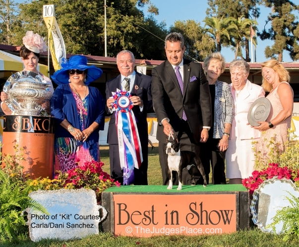 "Santa Barbara Kennel Club Best In Show - Boston Terrier ""Kit"""