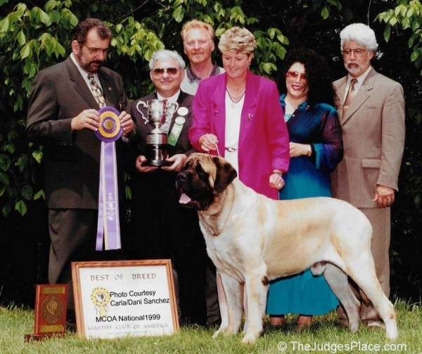 1999 Mastiff Club Of America National Dog Show