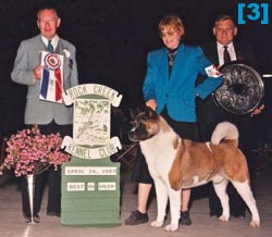 CH. BEN & BREEDER-OWNER-HANDLER WON AMERICA'S TOP DOG SHOWS