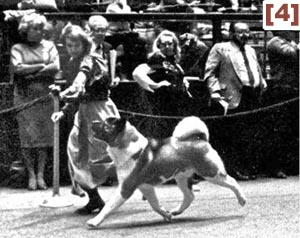 BEVERLY BONADONNA VICS, BREEDER, OWNER, HANDLER, WESTMINSTER WINNER